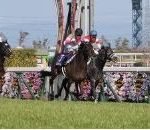 【高松宮記念 2020】血統展望・出走予定馬/予想オッズ、ローテとラップからの検証